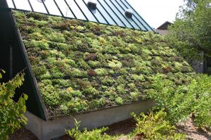A Green Roof is a Cool Roof