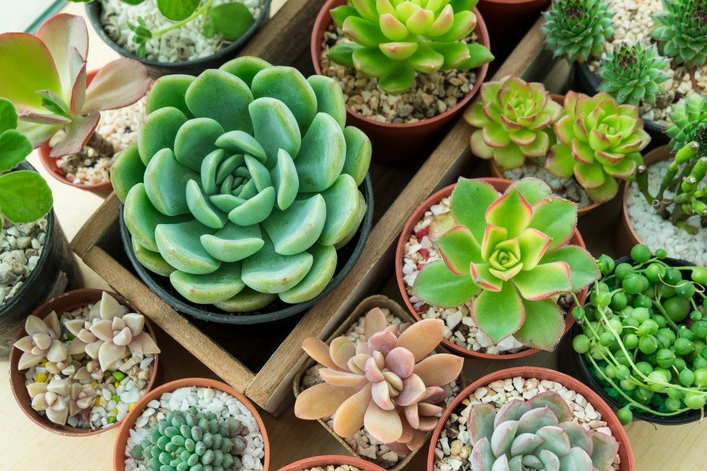 succulent plants in a pot for gardens