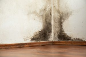Mold buildup in the corner of a house