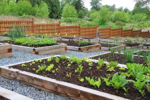 Backyard edible landscape