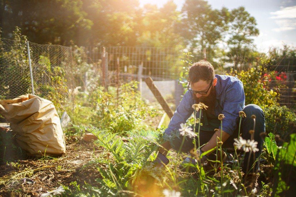 Man planting crops