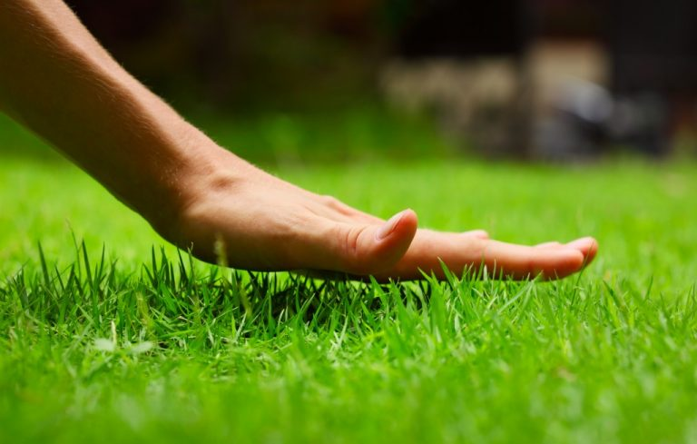 Hand touching the grass