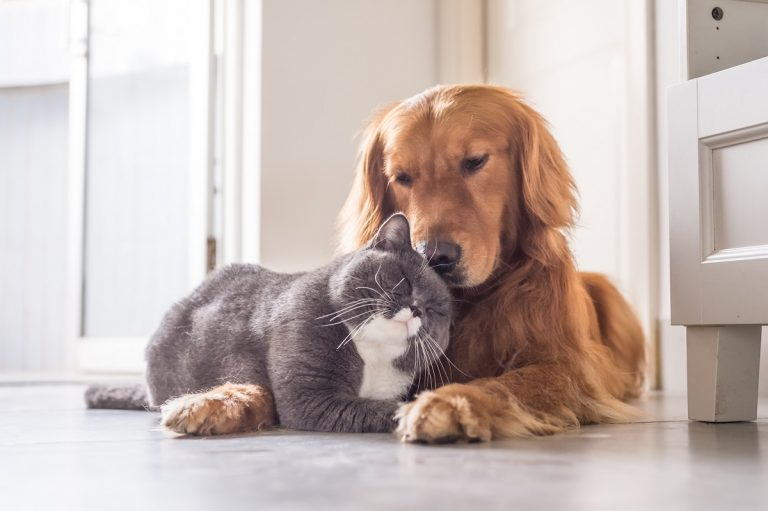 Cat and dog lying together