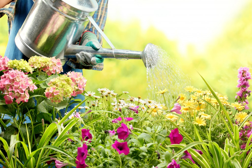 Watering flowers with watering can