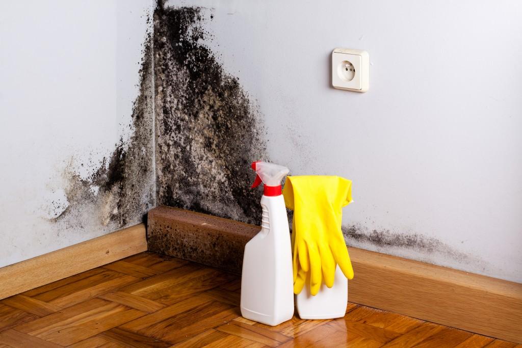 Black mold in the corner of room