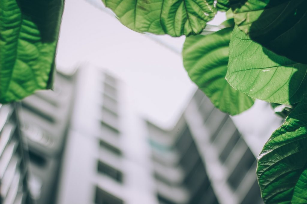 leaves with buildings on the background